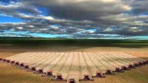 tahıl hasatı